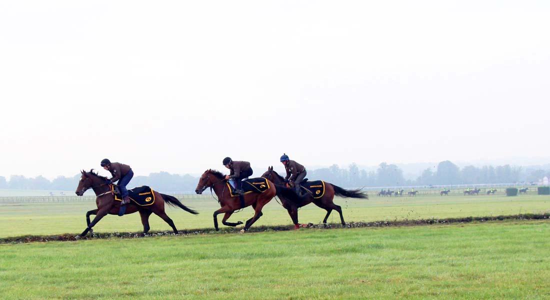 John Ryan Racing racehorse training