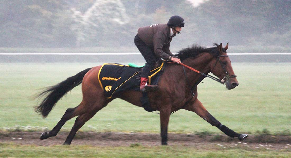 John Ryan Racing racehorse training